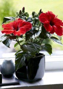 Растения, которые принесут в ваш дом любовь