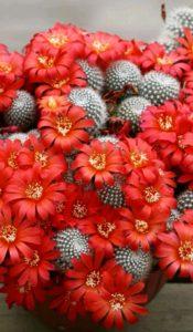 Как узнать названия кактусов?