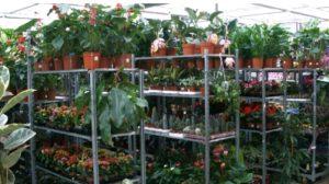Приобретение растений