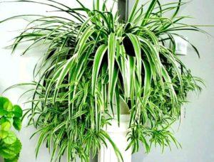 Облик комнатных растений (часть 1)