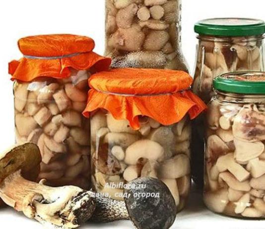 солим грибы, маринуем маслята, маринуем опята