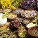 9 лекарственных растений чтобы прогнать бессонницу